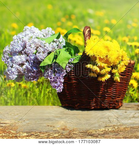 Summer Wicker Basket With Yellow Dandelions Flowers And Lilacs On Meadow
