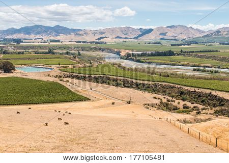 aerial view of vineyards in Awatere valley in New Zealand
