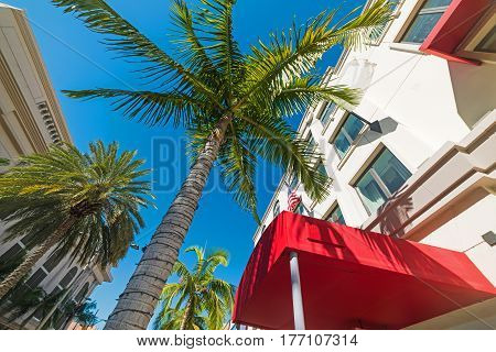 Palm trees in Rodeo Drive in California
