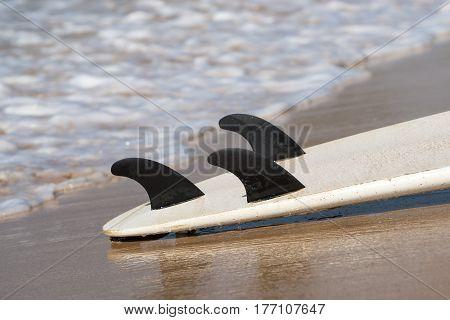 surfboards lays on the tropical beach Sri Lanka