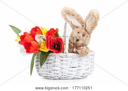 Easter rabbit with colorful tulips in a basket isolated on white background