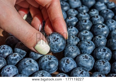 female hand picking one big fresh blueberry out of pile