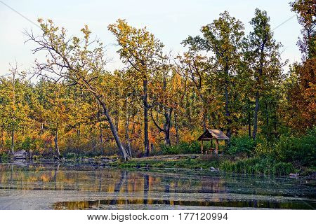 Autumn forest lake landscape with trees and a pergola