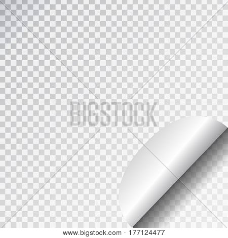 Vector white paper page curl on the transparent background.