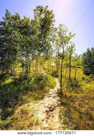 Hiking trail in Sleeping Bear Dunes National Lakeshore in Northern Michigan
