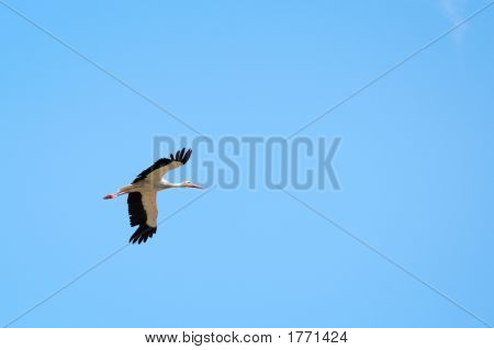 A stork in flight against clear sky poster