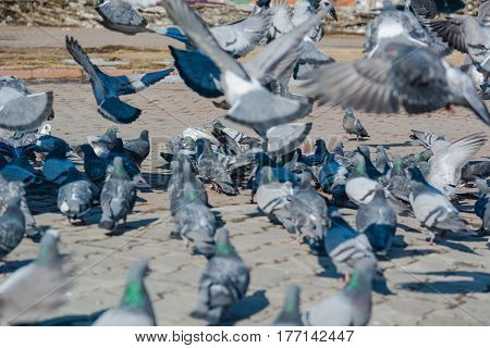 It Is A Lot Of Pigeons.