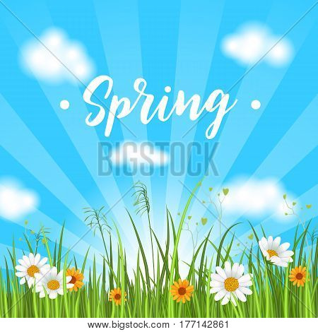 Spring banner with blooming chamomile flower and green grass on sky background vector illustration. Floral decorated spring design for holiday, romantic celebration card, spring meadow template