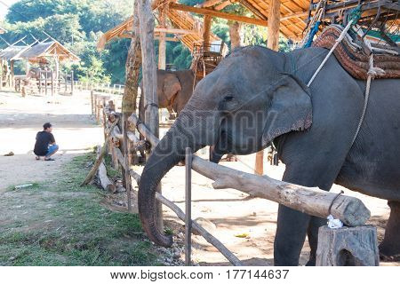 elephant in trapping pen for tourists in nort of Thailand