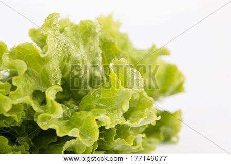 Fresh Lettuce closeup isolated on white background.