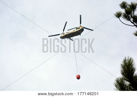 Chinook Firefighting Helicopter Carrying Water Flies to a Forest Fire