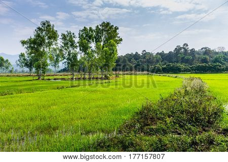 Thai Agriculture