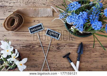 Two Signs With English Text Welcome Spring. Flowers Like Grape Hyacinth And Crocus. Gardening Tools Like Rake And Shovel. Hemp Fabric Ribbon. Aged Wooden Background