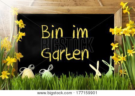 Blackboard With German Text Bin Im Garten Means I Am In The Garden. Sunny Spring Flowers Nacissus Or Daffodil With Grass, Easter Egg And Bunny. Rustic Aged Wooden Background.