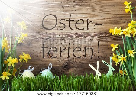 Wooden Background With German Text Osterferien Means Easter Holidays. Easter Decoration Like Easter Eggs And Easter Bunny. Sunny Yellow Spring Flower Narcisssus With Gras. Card For Seasons Greetings