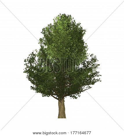 green trees of computer graphics in create isolated on white background.