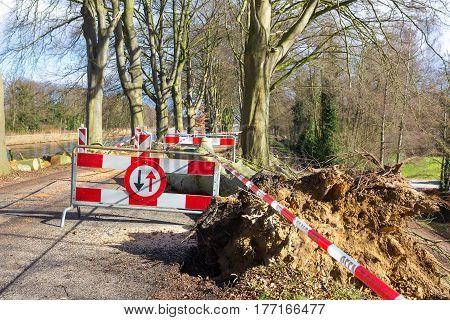 Traffic problems traffic signs storm damage fallen beech tree