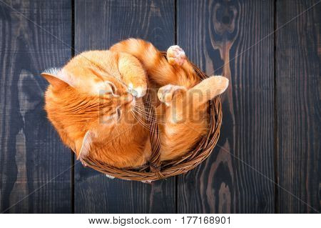 Cute red cat sitting in a basket on the wooden background