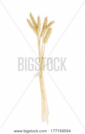 Bundle of the stalks of the ripe wheat with ears tied by a twine on a light background