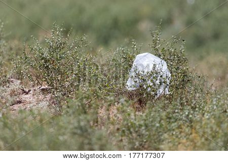 Package in nature as garbage . Photo taken by professional camera and lens