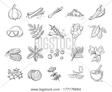 Doodle spices and herbs vector hand drawn set. Spice sketch for cooking, illustration of drawing organic spice ingredient
