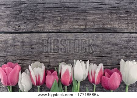 Frame Of Tulips On Rustic Wooden Background With Copy Space For Message. Spring Flowers. Greeting Ca