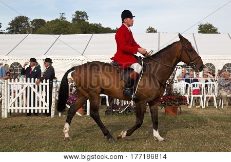 WEEDON, UK - SEPTEMBER 1: Members of a local fox hunt parade the hounds and horses around the arena before inviting the public in to play with the dogs at the Bucks show on September 1, 2016 in Weedon