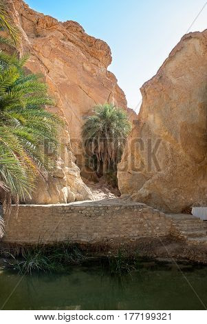 Oasis in the rock gorge with a pond with green water