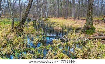 bog in forest in early spring time