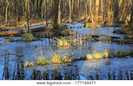 swamp in deep forest in spring time