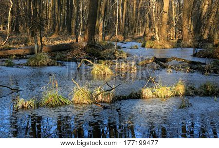 early spring time on forest bog