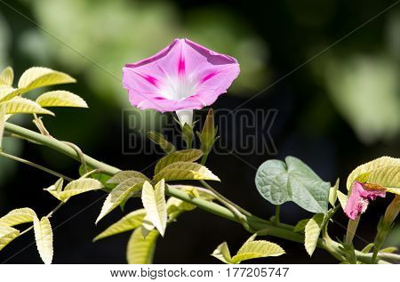 purple flower in nature Photo taken by professional camera and lens