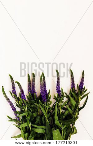 Bunch Of Veronica Flowers Isolated On White Background