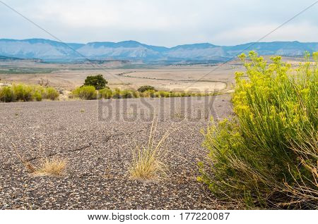 A green sagebrush by the desert road