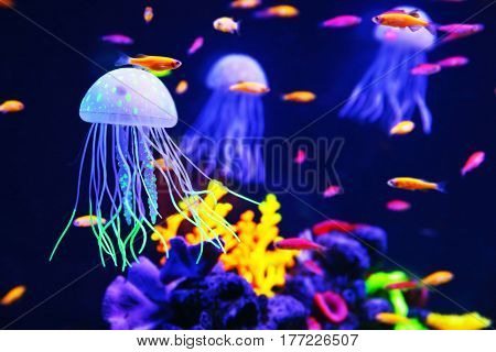 Beautiful colorful jellyfish in aquarium