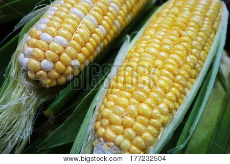Yellow And White Corn Cobs