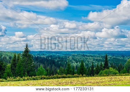 View of the field and the woods on a summer day