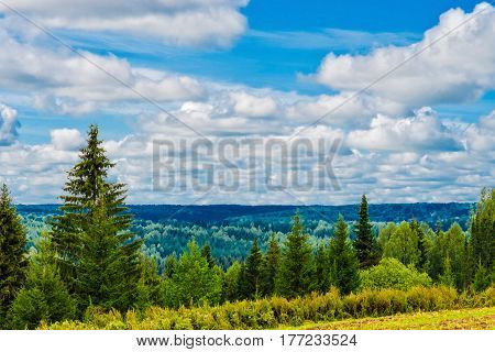 View of the near and far woods on a summer day
