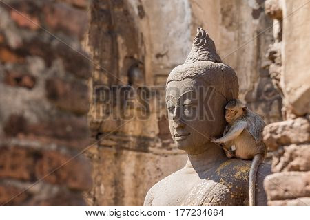 Buddha imgae https://www.bigstockphoto.com/account/uploads/contribute?edit=177234664#categorieswith monkey in the ruined ancient