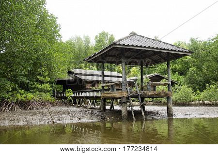 Abandoned House And Old Outdoor Pavilion At Riverside Of Riverbank And Mangroves Forest Or Intertida