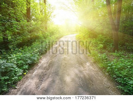 Country road in a green forest leading to bright sun