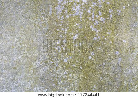 Old Plastered Wall, Overgrown With Moss, For Backgrounds