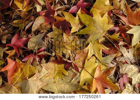 Milan (Lombardy Italy): the colors of the autumn