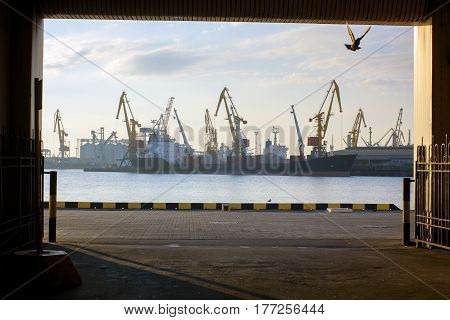 Seascape. Flying dove in unnel overlooking seaport. Loading cranes in early morning