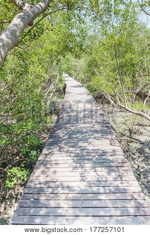 Natural beautiful scene of wooden bridge walkway in mangrove forest.