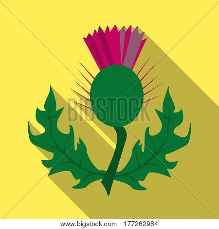 Thistles with green leaves.Medicinal plant of Scotland.Scotland single icon in flat style vector symbol stock web illustration.