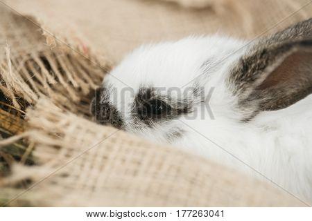 Cute Rabbit Lying On Sackcloth