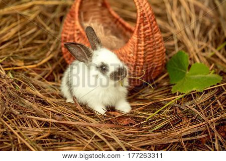 Cute Rabbit Sitting With Green Leaf At Wicker Basket