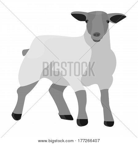 Little white mountain sheep.Scottish fold sheep.Scotland single icon in monochrome style vector symbol stock web illustration.