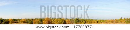 Panorama of a autumn orange forest and sky